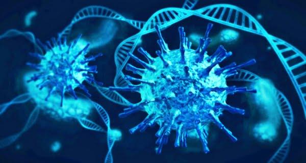 Moderna vaccine forms antibodies against the corona