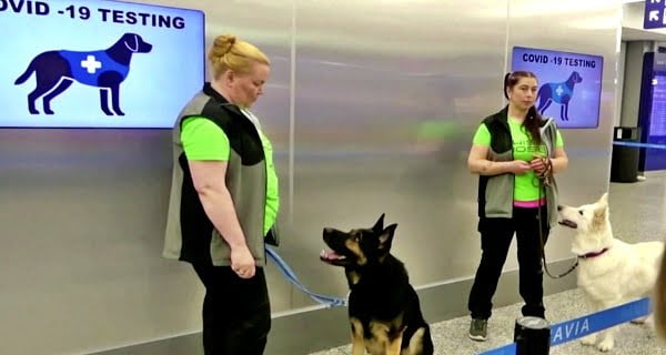 Now dogs will detect corona patient in pandemic