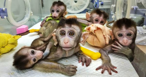 China is making new animals by changing genes
