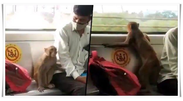 Monkey came in Delhi Metro