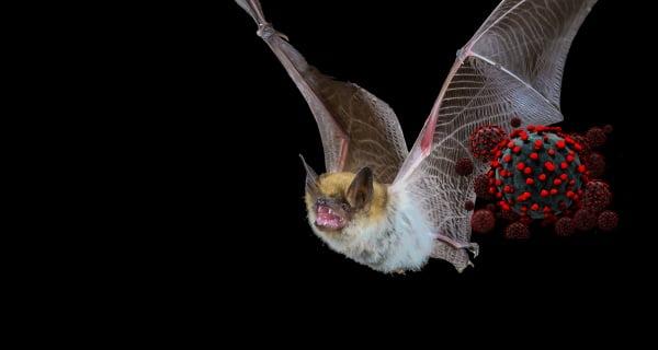 bats body