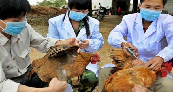 bird flu infection