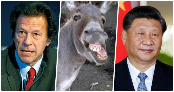 donkey export