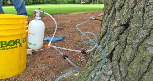 tree-treatment