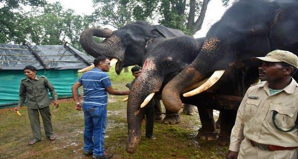 Elephant Rejuvenation Camp