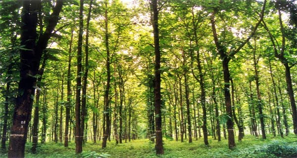 Forest Conservation Act
