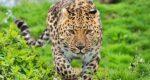 Leopard terror in Mumbais Goregaon